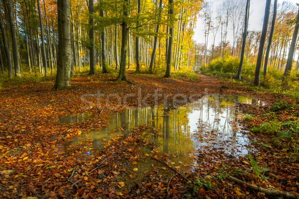 Színes ősz erdő fotó hdr nap Stock fotó © Fesus