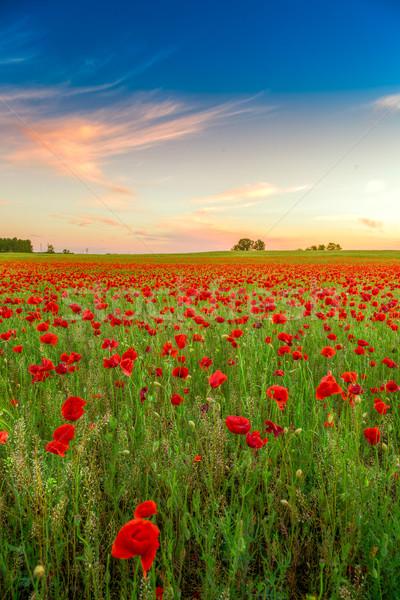 области закат зеленая трава красный небе Сток-фото © Fesus