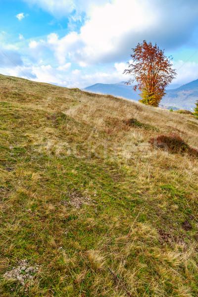 Morning in colorful autumn landscape in Romania Stock photo © Fesus