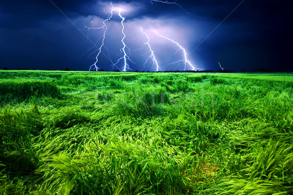 Storm over wheat field Stock photo © Fesus