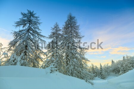 Winter forest in Alps Stock photo © Fesus