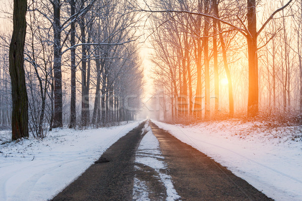 Stockfoto: Winter · landelijk · weg · ochtend · bomen · verlicht