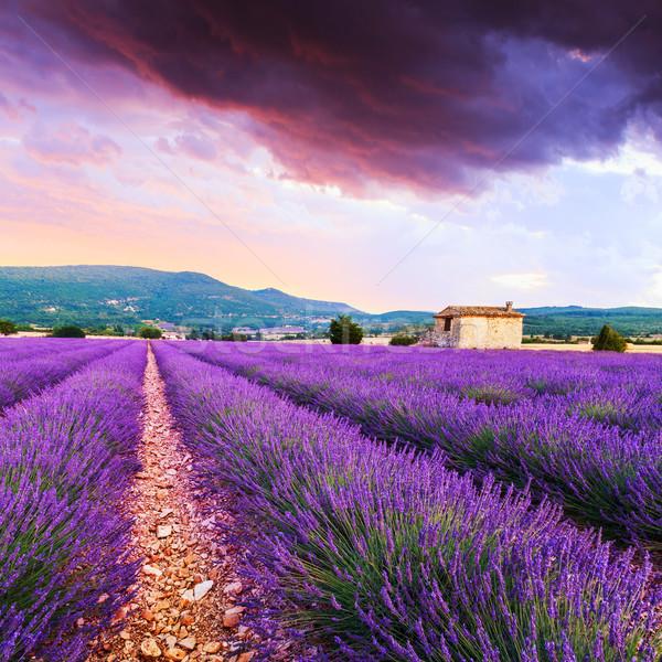 Lawendowe pole lata wygaśnięcia krajobraz kwiat chmury Zdjęcia stock © Fesus
