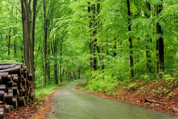 Zöld erdő ösvény fű út tájkép Stock fotó © Fesus