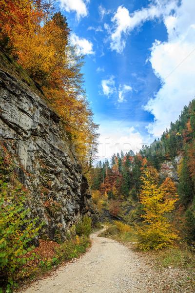 Galbena canyon in Apuseni mountains Stock photo © Fesus