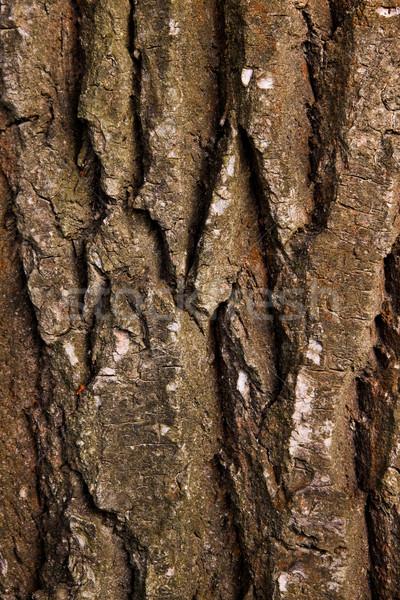 テクスチャ ツリー 樹皮 壁 背景 皮膚 ストックフォト © Fesus