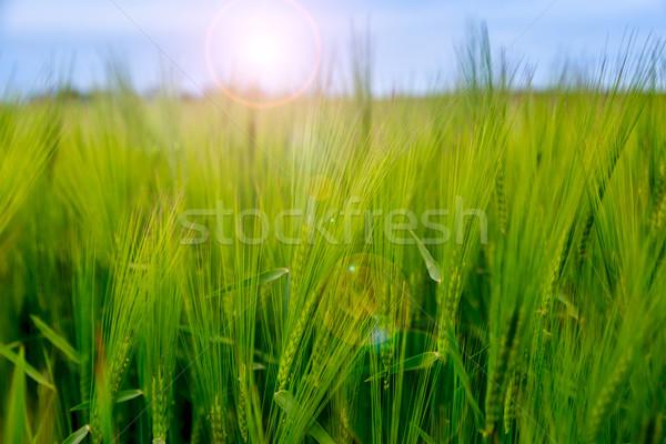 декораций трава природы пейзаж Сток-фото © Fesus