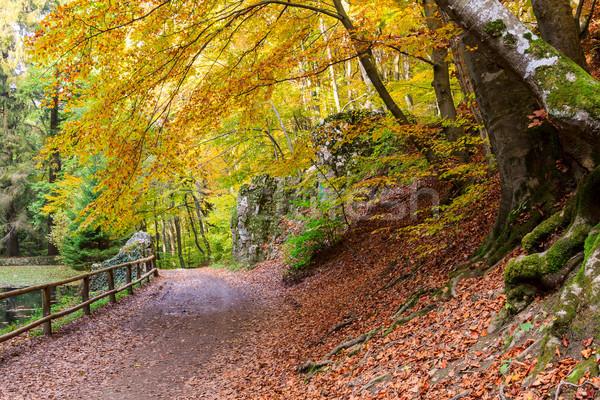 Autumn forest Stock photo © Fesus