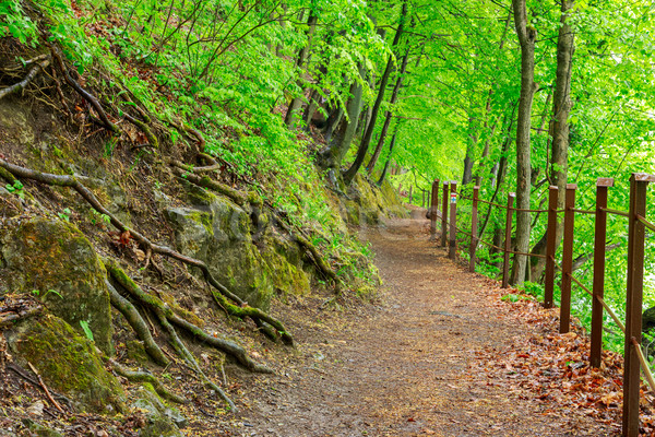 Green forest with pathway Stock photo © Fesus