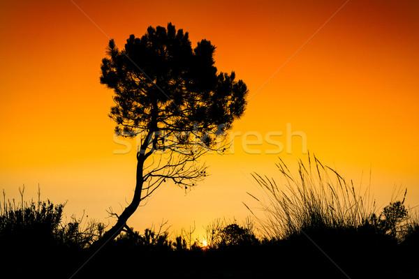 シルエット ツリー 日没 ザキントス 島 ギリシャ ストックフォト © Fesus
