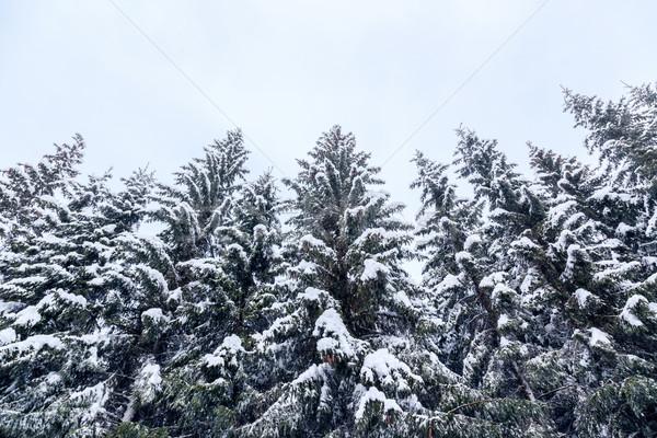 зима пейзаж лыжных центр гор Альпы Сток-фото © Fesus