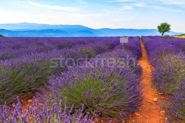 Lavendel veld zomer landschap hemel boom wolken Stockfoto © Fesus