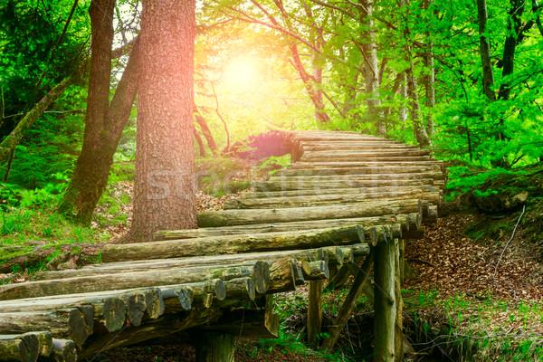 лес путь лет солнце закат природы Сток-фото © Fesus