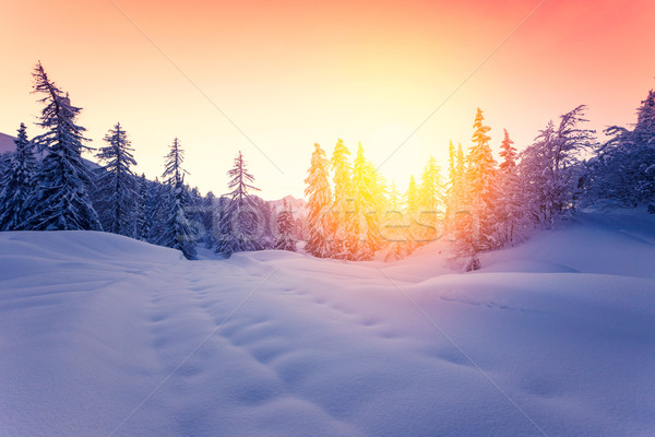 美しい 日没 冬 森林 アルプス山脈 スロベニア ストックフォト © Fesus