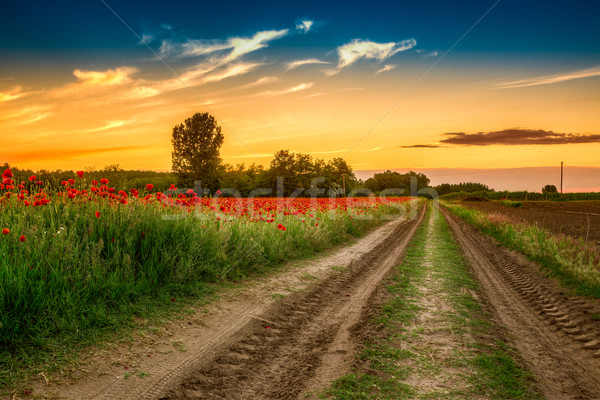 Campo pôr do sol grama verde vermelho céu Foto stock © Fesus