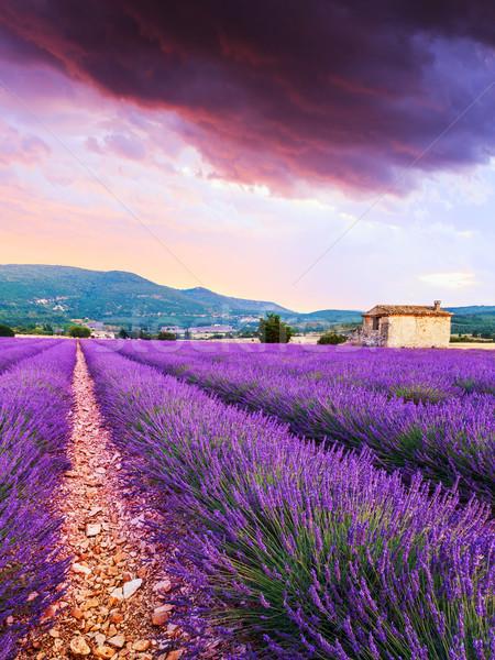 Lavendel veld zomer zonsondergang landschap bloem wolken Stockfoto © Fesus
