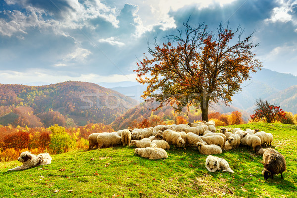 Autumn landscape in the Romanian Carpathians Stock photo © Fesus