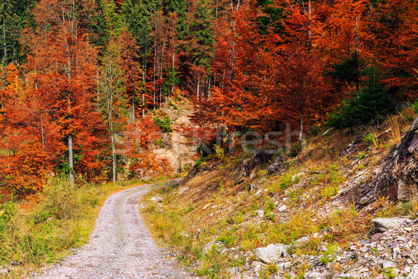 Stock photo: Footpath winding through colorful forest