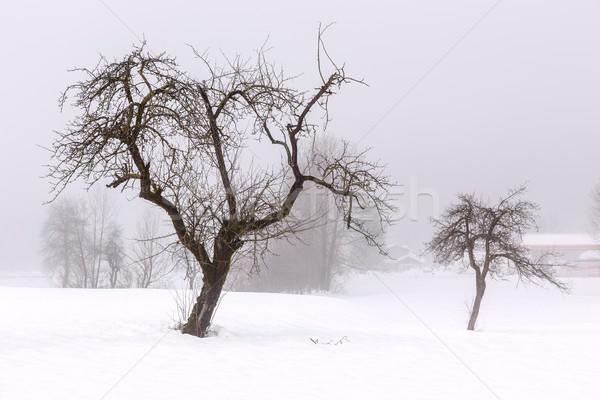 Proste minimalny zimą krajobraz Słowenia niebo Zdjęcia stock © Fesus
