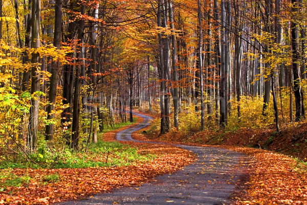 Autumn scene at the forest Stock photo © Fesus