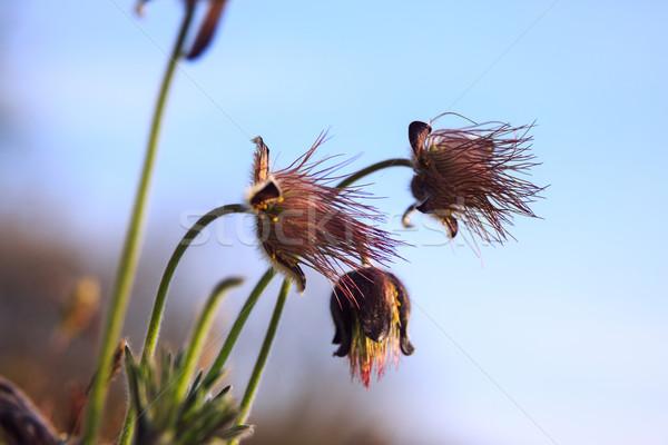 Grupo Montana primavera prado Hungria Foto stock © Fesus