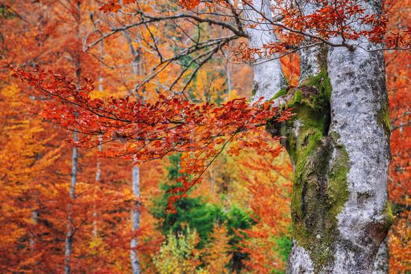 Najaar bos Roemenië kleurrijk landschap bergen Stockfoto © Fesus