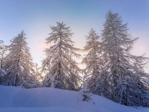 Hermosa invierno paisaje nieve cubierto árboles Foto stock © Fesus