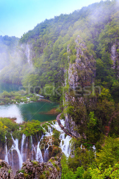 Croatie forêt cristal eau nature feuille Photo stock © Fesus