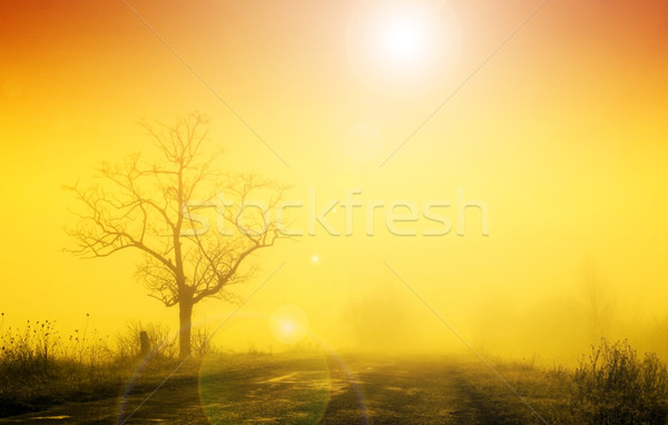 Misty sunrise with lonely tree in fog Stock photo © Fesus