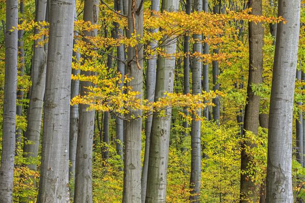 Színes ősz erdő nap természet tájkép Stock fotó © Fesus
