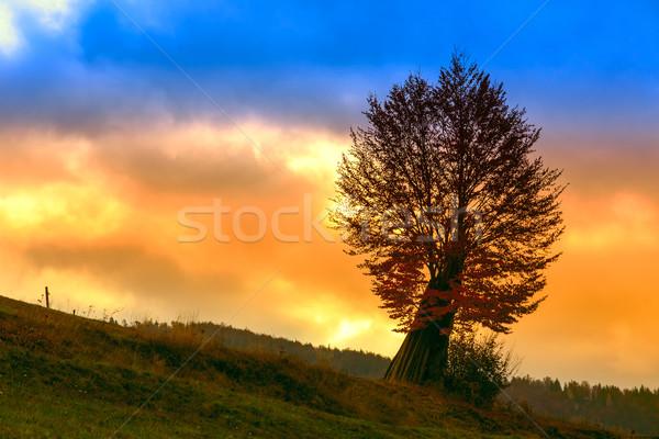 дерево утра туман трава лес пейзаж Сток-фото © Fesus