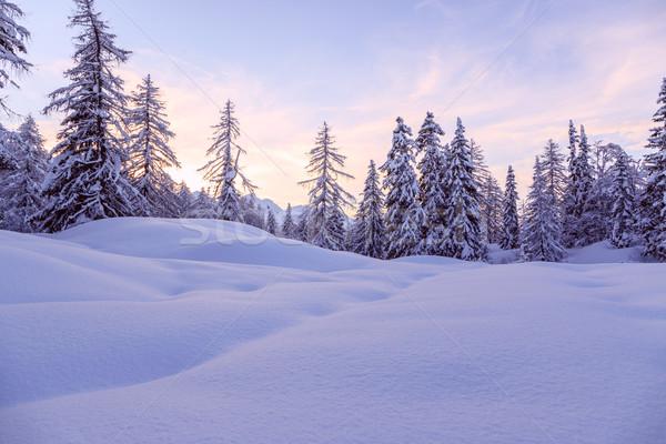 Invierno forestales alpes esquí centro naturaleza Foto stock © Fesus