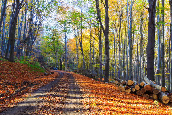 Footpath winding through colorful forest Stock photo © Fesus
