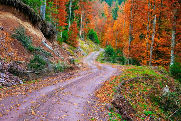 ösvény ősz erdő nap tájkép fény Stock fotó © Fesus
