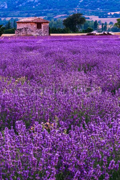 Foto stock: Campo · de · lavanda · verão · pôr · do · sol · paisagem · flor · sol