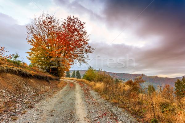 Morning in Carpathians mountain Stock photo © Fesus
