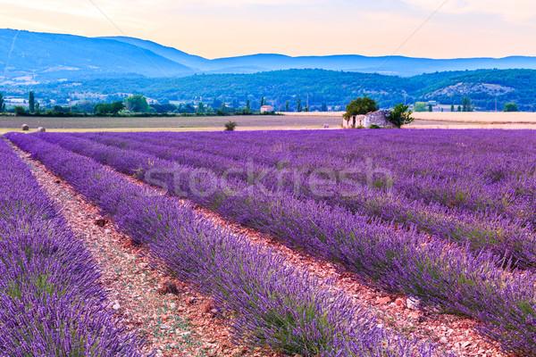 Lawendowe pole lata wygaśnięcia krajobraz kwiat słońce Zdjęcia stock © Fesus