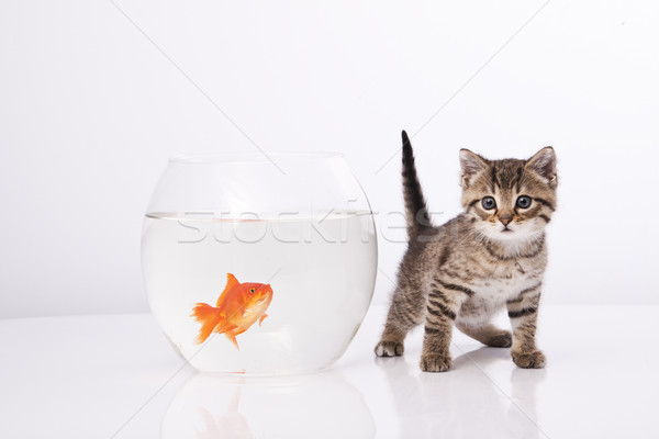 Photo stock: Maison · chat · or · poissons · eau · verre