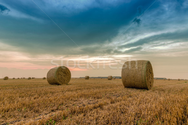 Straw bales with dramatic sky Stock photo © Fesus