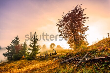 Magical sunrise Stock photo © Fesus