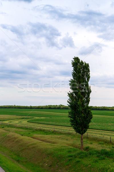 Tavasz mező egyedüli fa fű fa Stock fotó © Fesus