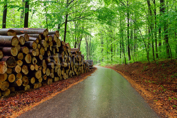 Yeşil orman çim yol manzara Stok fotoğraf © Fesus