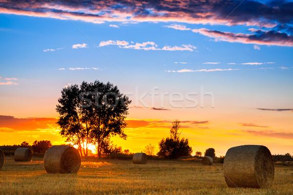 конец день области сено тюк Венгрия Сток-фото © Fesus