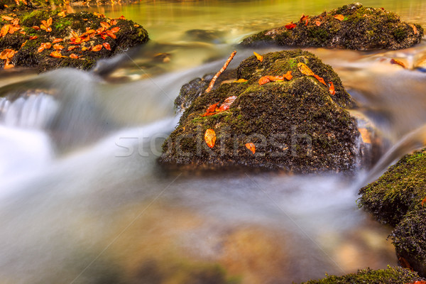 Arroyo profundo montana forestales agua madera Foto stock © Fesus