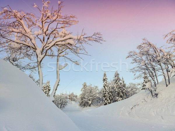 Winter landscape near Vogel ski center Stock photo © Fesus