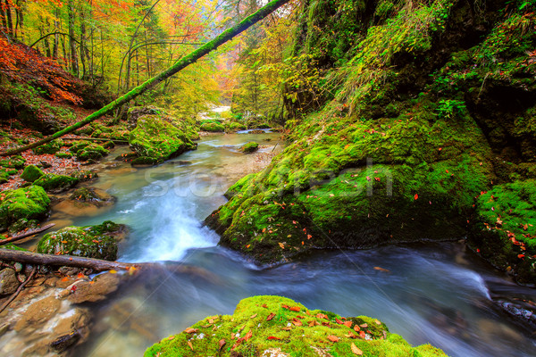 Creek deep in mountain forest  in Transylvania Stock photo © Fesus