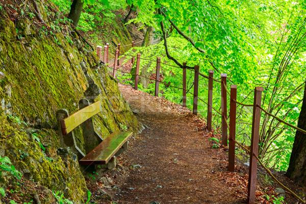 Zöld erdő ösvény út tájkép sétál Stock fotó © Fesus