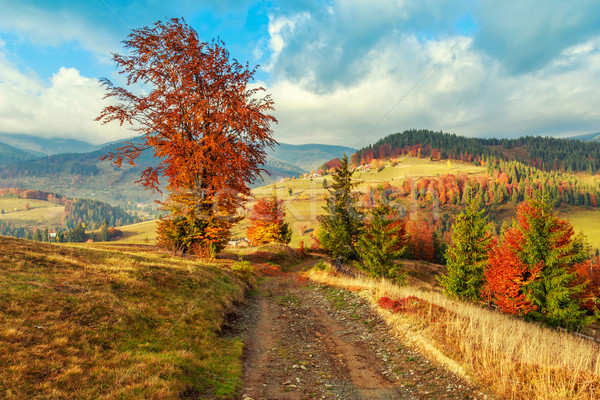Morning in Carpathians mountain Transylvania Stock photo © Fesus