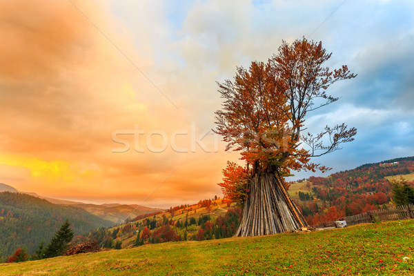 Autumn tree Stock photo © Fesus