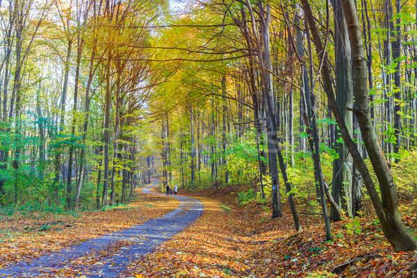 Kolorowy lasu Węgry drogowego słońce wygaśnięcia Zdjęcia stock © Fesus